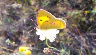 Rezervatia Naturala Padurea Fantanita Murfatlar