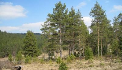 Rezervatia naturala Tinovul Gaina-Lucina Suceava
