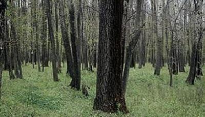 Rezervatia naturala Padurea Balteni