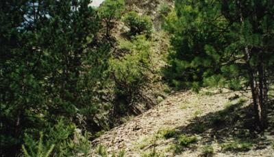 Rezervatia naturala Groapa cu Pini Vrancea