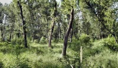 Rezervatia naturala Lunca Siretului Vrancea