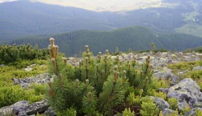 Rezervatia naturala Muntele Goru Vrancea