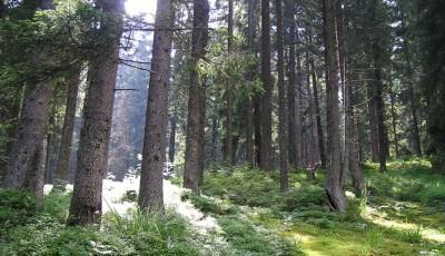 Rezervatia naturala Padurea Verdele Vrancea